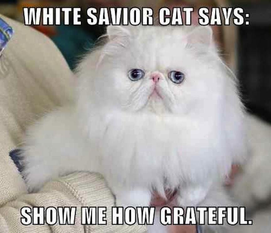 Thank you, White Savior Cat, f...
