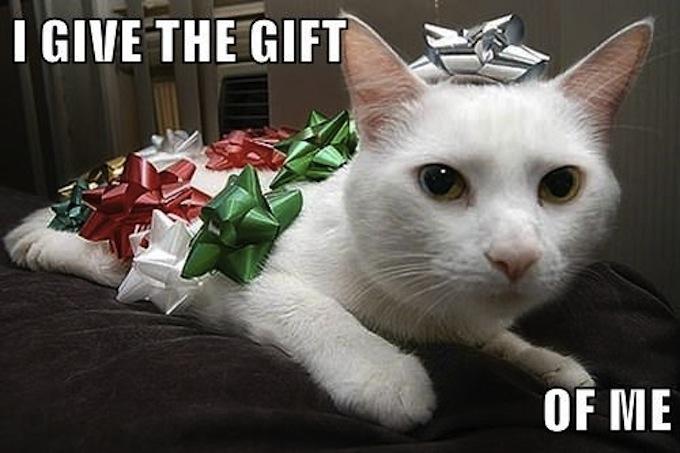 White Savior Cat   a paper bir...